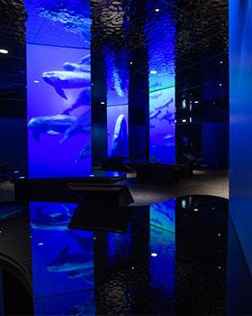 ocean-futur
